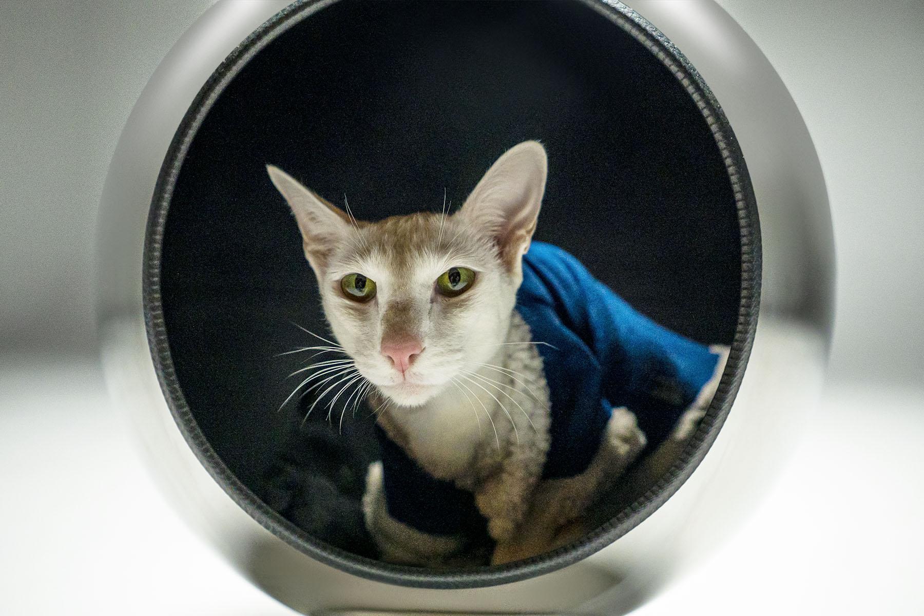 Piranjas Pluto Cat Bed (Variant 8)