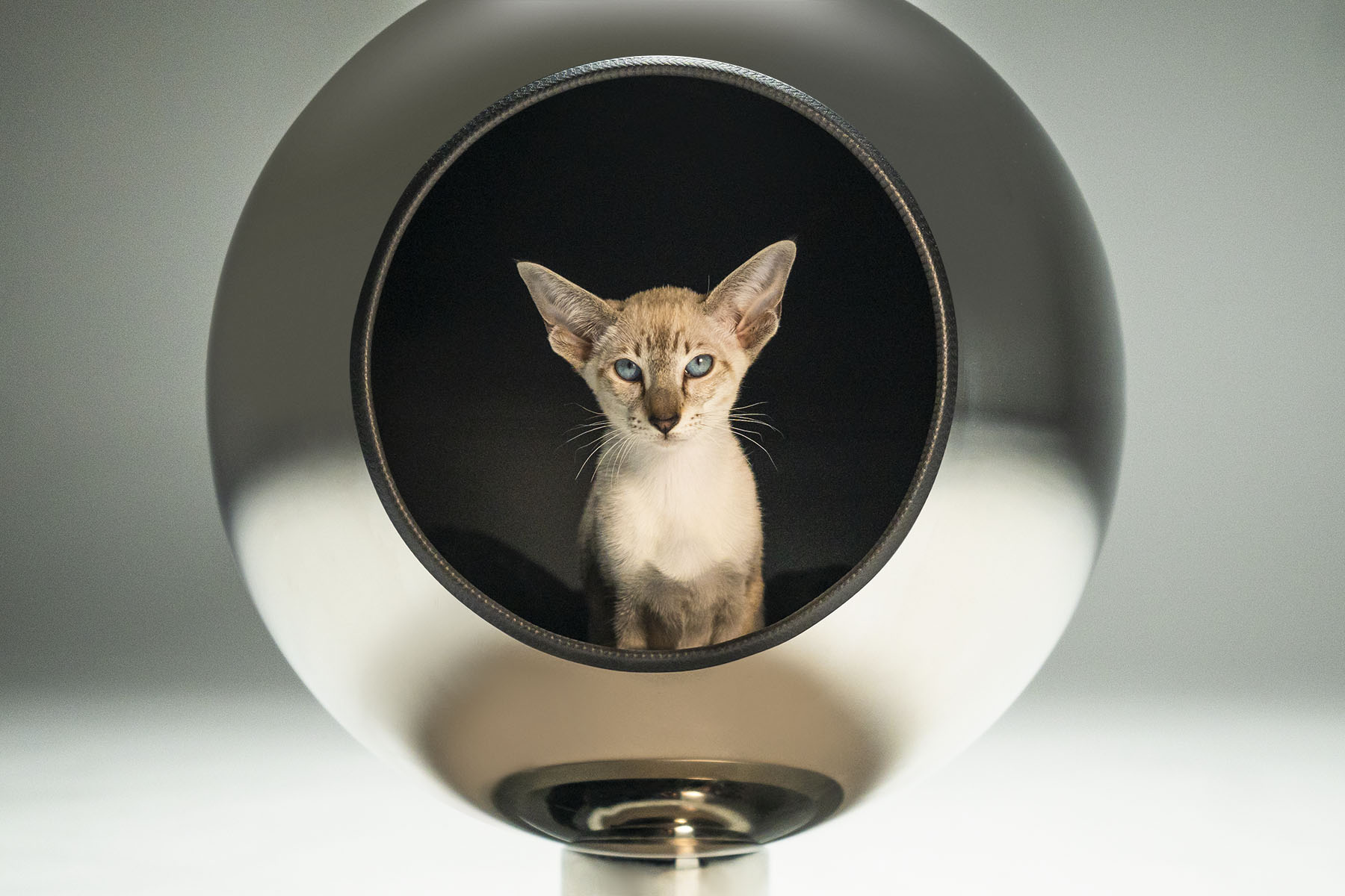 Piranjas Pluto Cat Bed (Variant 12)